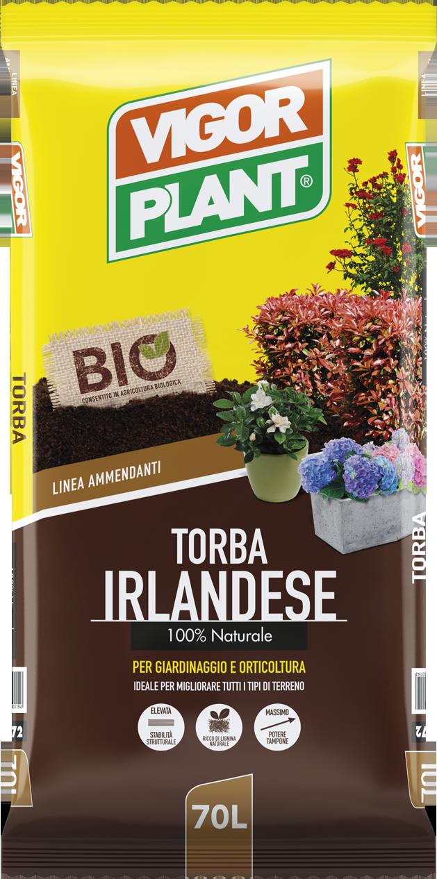 TORBA IRLANDESE