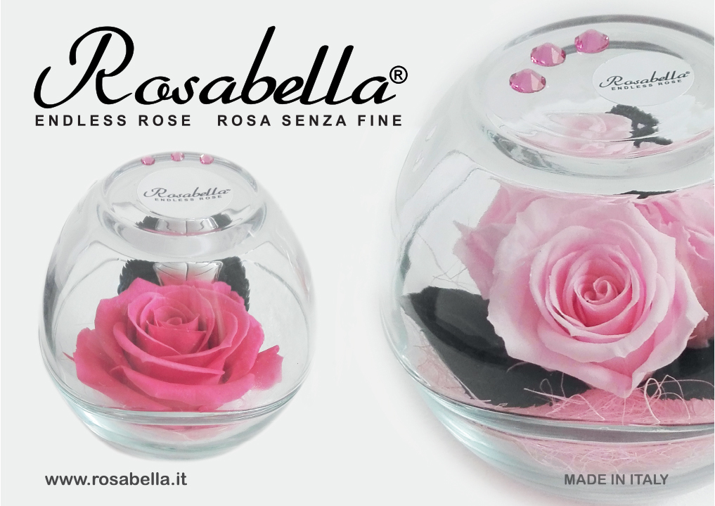 Rosabella_Endless Rose