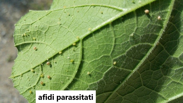 ENDBAG MB - controllo degli insetti dannosi