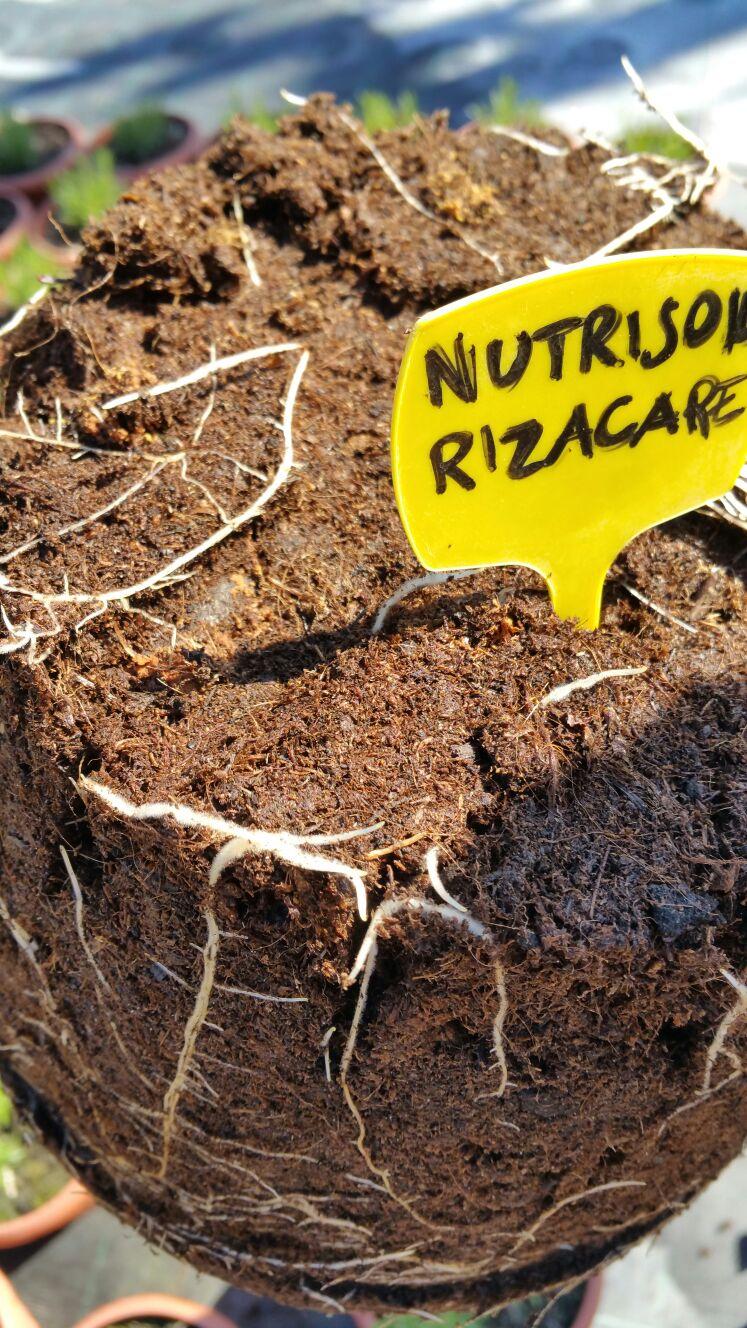 NUTRISOIL - Bioattivatore del suolo