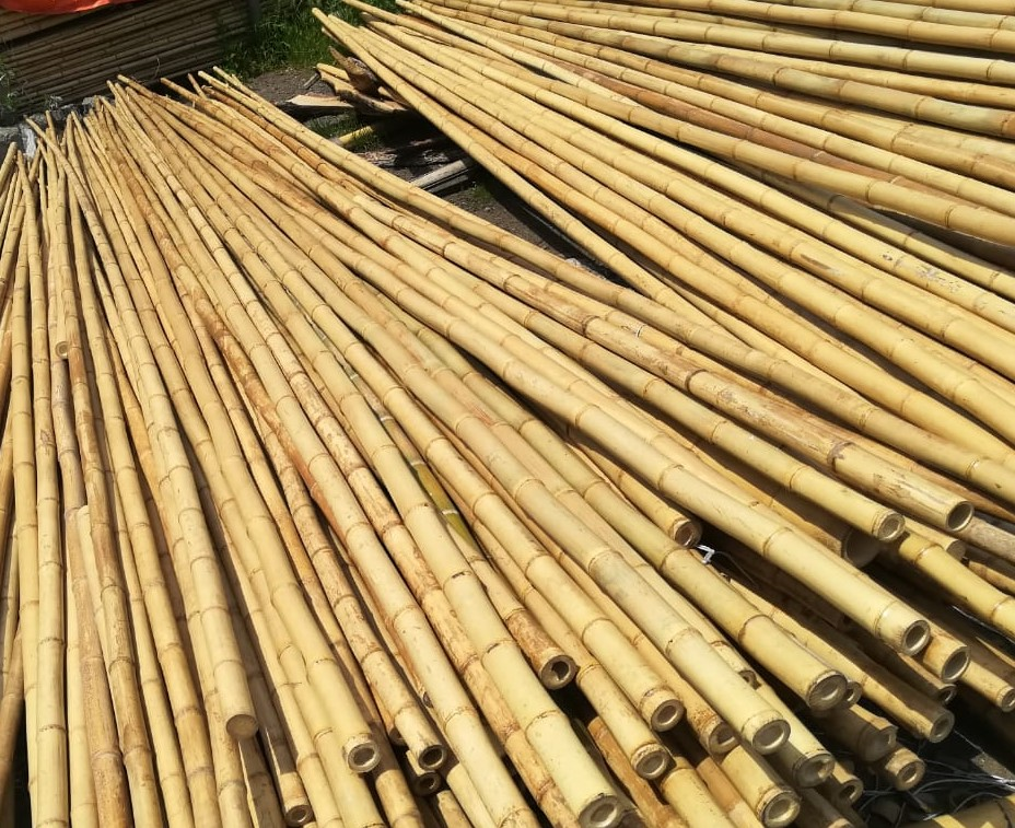Decoration Bamboo