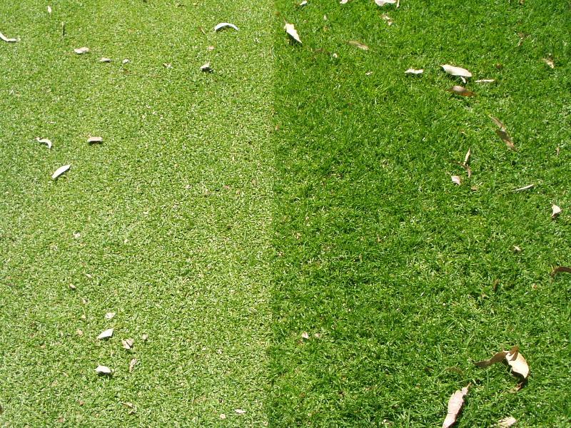 village green turfgrass