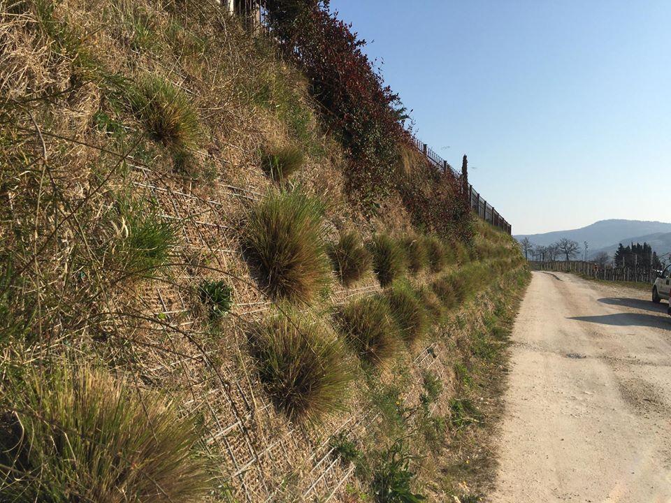 Chiodi Vegetali-Erosion Control