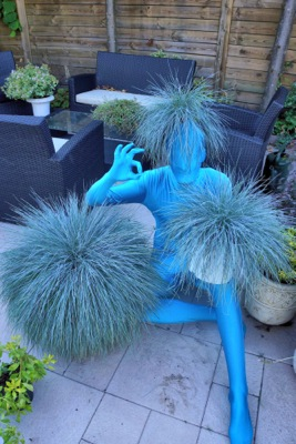 Festuca 'Intense Blue' ('Casblue' PBR)